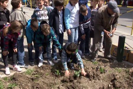 akcija sadnje cvea u gradu