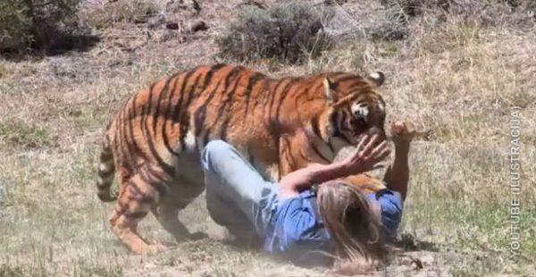tigar napada