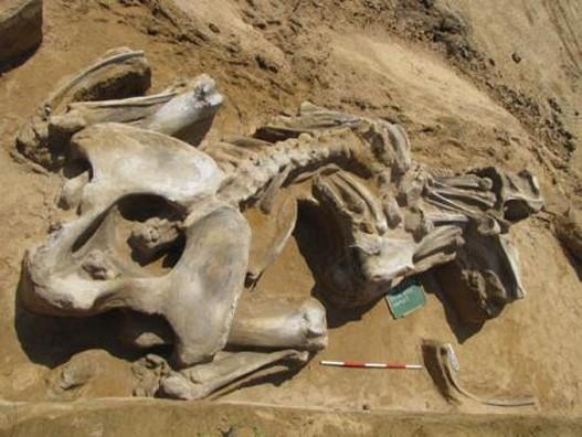 Vika-mamut