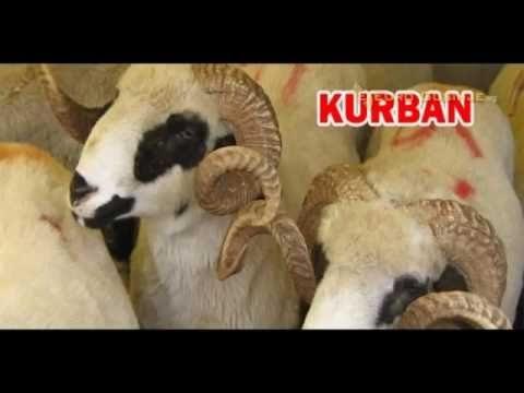 humanitarna-organizacija-merhamet-nece-primati-zive-kurbane-i-koze,-a-podela-mesa-ce-se-vrsiti-na-kucne-adrese
