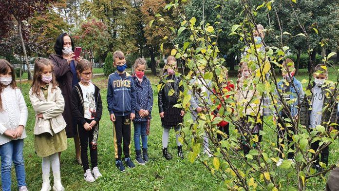 malisani-zasadili-drvo-generacije