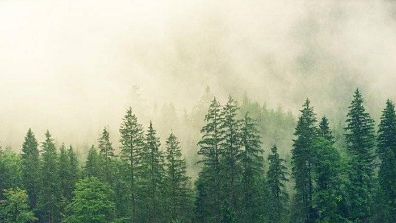 danas-je-dan-zastite-prirode,-pod-zastitom-7,66-odsto-srbije