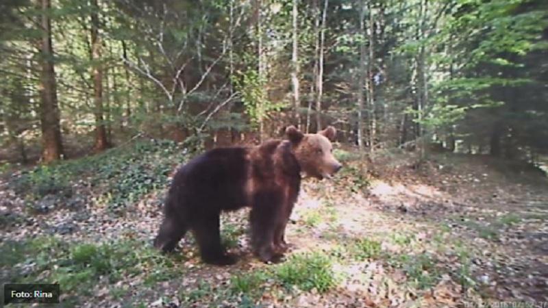 oci-u-oci-sa-medvedom:-postara-na-goliji-presrela-ova-zivotinja,-a-onda-je-poceo-da-vice-i-bezi